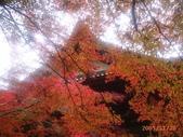 My Blog:神護寺-3