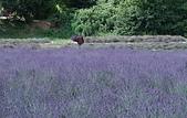 法國-Provence-2:Apt-3140