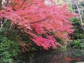 My Blog:植物園-1