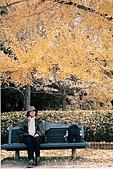 My Blog:植物園_銀杏
