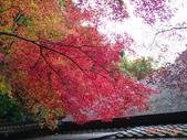 My Blog:祇王寺-2