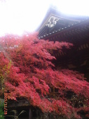 My Blog:神護寺-1