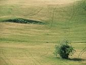 義大利-Siena:DSCF8753