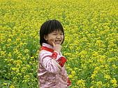 油蔴菜花田的美:PICT0116