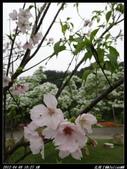 20120408花開了:花開了05.jpg