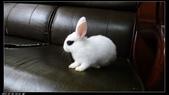 寶貝兔子的照片:寶貝們029.jpg