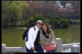 韓國櫻花:韓國258.jpg
