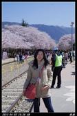 韓國櫻花:韓國051.jpg