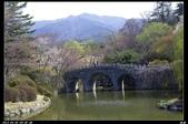 韓國櫻花:韓國259.jpg