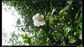 20121124 福山植物園:福山植物園014.jpg