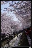 韓國櫻花:韓國128.jpg