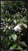 20121124 福山植物園:福山植物園015.jpg