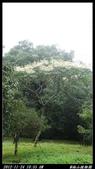 20121124 福山植物園:福山植物園016.jpg