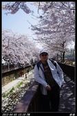 韓國櫻花:韓國132.jpg