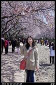 韓國櫻花:韓國062.jpg