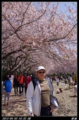 韓國櫻花:韓國064.jpg
