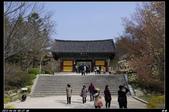 韓國櫻花:韓國216.jpg