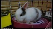 兔子弟弟報到:弟弟003.jpg