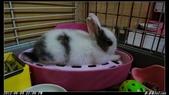 兔子弟弟報到:弟弟006.jpg