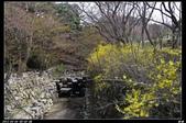韓國櫻花:韓國217.jpg