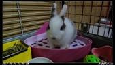 兔子弟弟報到:弟弟008.jpg