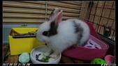 兔子弟弟報到:弟弟009.jpg