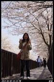 韓國櫻花:韓國139.jpg