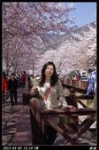 韓國櫻花:韓國142.jpg