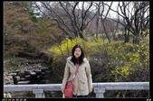 韓國櫻花:韓國218.jpg