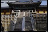 韓國櫻花:韓國219.jpg