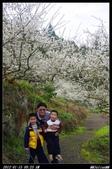 20120115 烏松崙梅花:烏松崙06.jpg