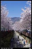 韓國櫻花:韓國144.jpg