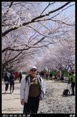 韓國櫻花:韓國072.jpg