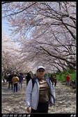 韓國櫻花:韓國076.jpg
