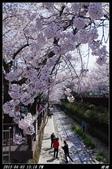 韓國櫻花:韓國148.jpg
