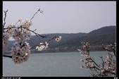 韓國櫻花:韓國288.jpg
