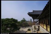 韓國櫻花:韓國225.jpg