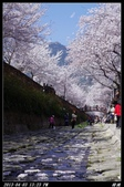 韓國櫻花:韓國158.jpg