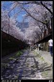 韓國櫻花:韓國161.jpg