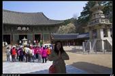 韓國櫻花:韓國229.jpg