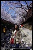 韓國櫻花:韓國162.jpg