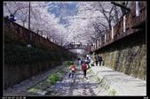 韓國櫻花:韓國165.jpg