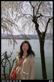 韓國櫻花:韓國298.jpg