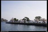 韓國櫻花:韓國173.jpg