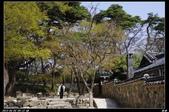 韓國櫻花:韓國234.jpg