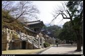 韓國櫻花:韓國238.jpg