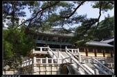 韓國櫻花:韓國240.jpg