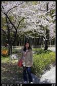 韓國櫻花:韓國103.jpg