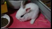 寶貝兔子的照片:寶貝們001.jpg