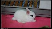 寶貝兔子的照片:寶貝們002.jpg